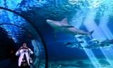 shark overhead, Maui aquarium, Maui, Hawaii