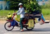 plants on scooter, district 7, Saigon, Vietnam