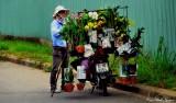 Orchids for sale, Hoi An, Vietnam