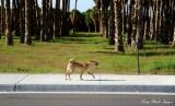 proud dog Thermal CA