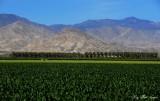 fertile desert, Thermal, California