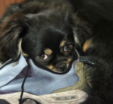 Lexy as a Puppy