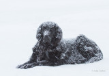 addie snowdog-8810.jpg