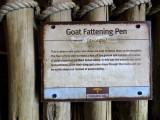 Goat fattening pen.  #0939