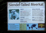 Meerkat info board.  Very interesting info!  #1009