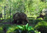 Really big bear. No zoom.  25mm-equiv. 1232.