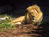 Paused at Lion, trying to wake up in that direct sunlight overhead. mImg_1669.jpg