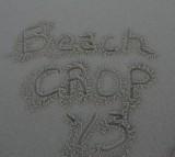 Beach Crop 2013