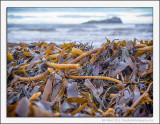 Kelp Mountain