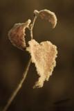 11/17/2012 - _MG_8745.jpg