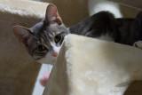 12/05/2012 - _MG_8857.jpg