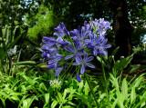 Flower in the Sydney Royal Botanical Gardens