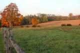 Autumn Along the Fenceline