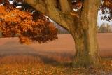 Majestic in Autumn