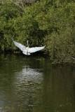 Eagle Lakes Community Park Birding - Feb. 5, 2013