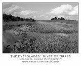 Our Days in the Everglades