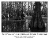 Museum of The Everglades Activities - Feb. 21, 2013