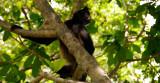 Spider Monkeys - Cancun 04/13