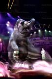 cirque monte carlo 36963.jpg