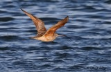 Birds along Oso Bay