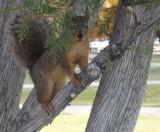 ISU School of Engineering Squirrel DSCF7518.jpg