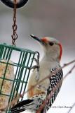 Birds in my Back Yard