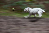 speed!