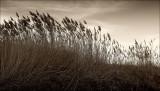 Du vent dans les hautes herbes