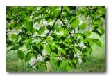 Backlit Dogwood Leaves and Flowers
