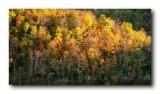 Ozark Autumn Color