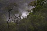 Après l'orage. Parc d'Amboro