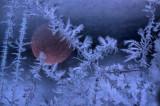 Frosty 05.jpg