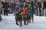 Dog Sled Races