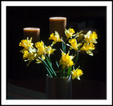 Jonquils in Sunlight