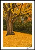 Fallen Bright Leaves