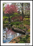 Spring with Pond, Crabtree and Dogwood
