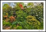 Entrance Garden, fountain side with viburnums