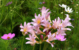 Flowers 2004