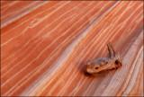 Wave log