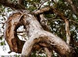 Tree made man