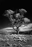 IR tree