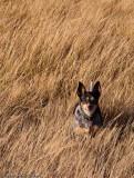 Bella on patrol