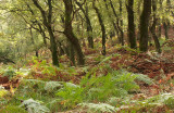 Oak Forest - Spaartelgenbos