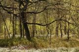 Spring Forest - Lentebos, tegenlicht