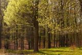 Hoog Soerensche bos