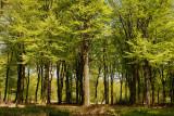 Gortelsche bos
