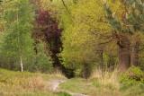 Doorkijkje lente - gemengd bos