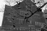 Shoe Tree, IU style