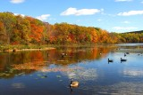 NYS in Autumn-09.jpg