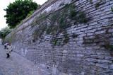 Cymbalaria-muralis_wall.jpg